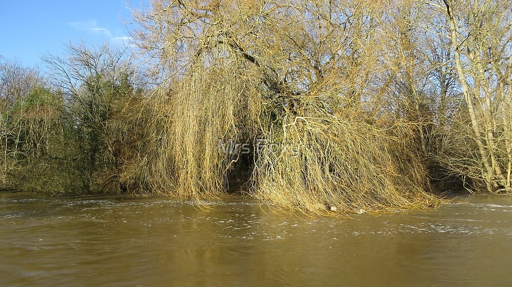 Weeping Willows Blandford Forum by Mrs Foxy