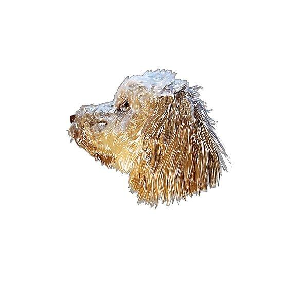 cockapoo puppy by nastypastys