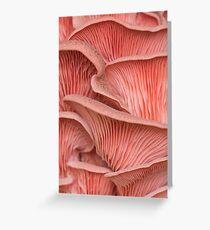 Pink oyster mushroom pleurotus  Greeting Card