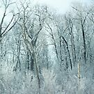 Winter's grasp by Robin Simmons