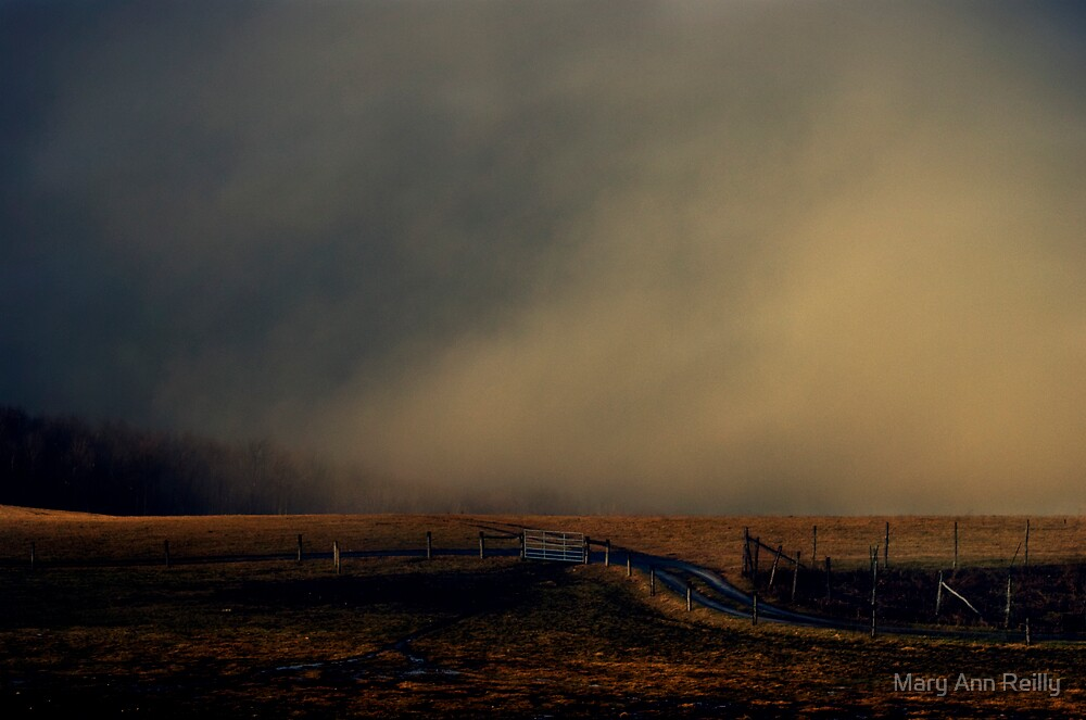 Late Light, Open Field by Mary Ann Reilly