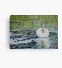River Nene Swan Metal Print