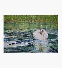 River Nene Swan Photographic Print