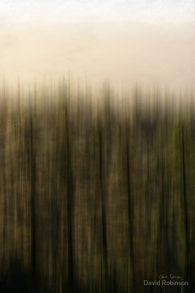 Forest 2 by David Robinson