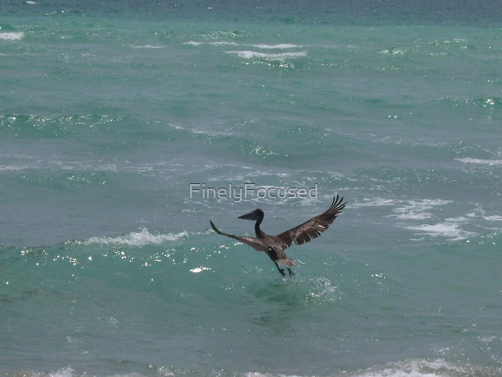 Taking Flight by FinelyFocused