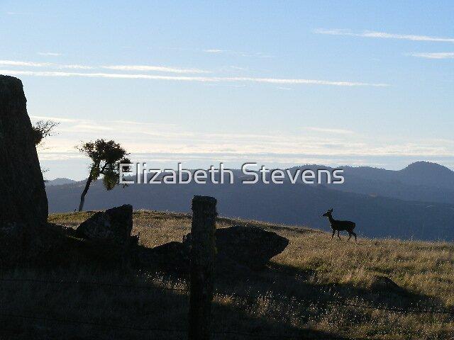 Good Morning Stroll by Elizabeth Stevens