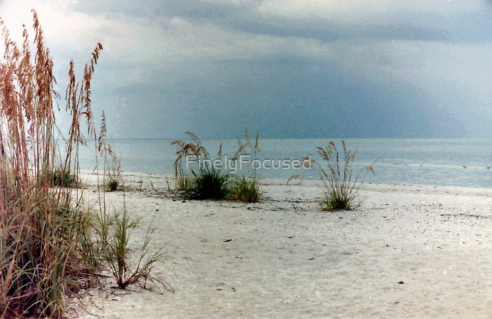 Sea Oats by FinelyFocused