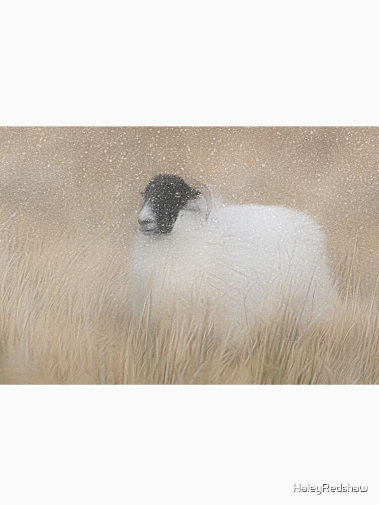Moorland sheep in the snow by HaleyRedshaw
