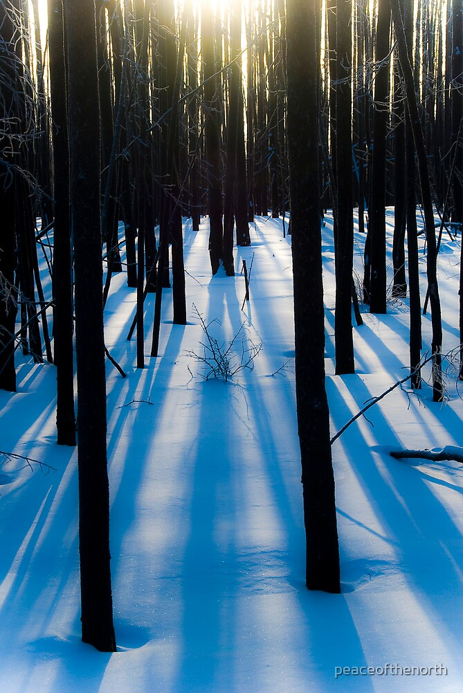Winter Shadows by peaceofthenorth