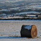 Frozen Tractor Egg by dougie1