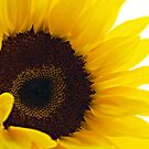my sunshine by Angel Warda