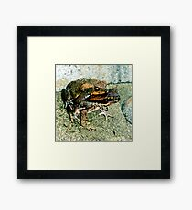 Frogs Humping Framed Print