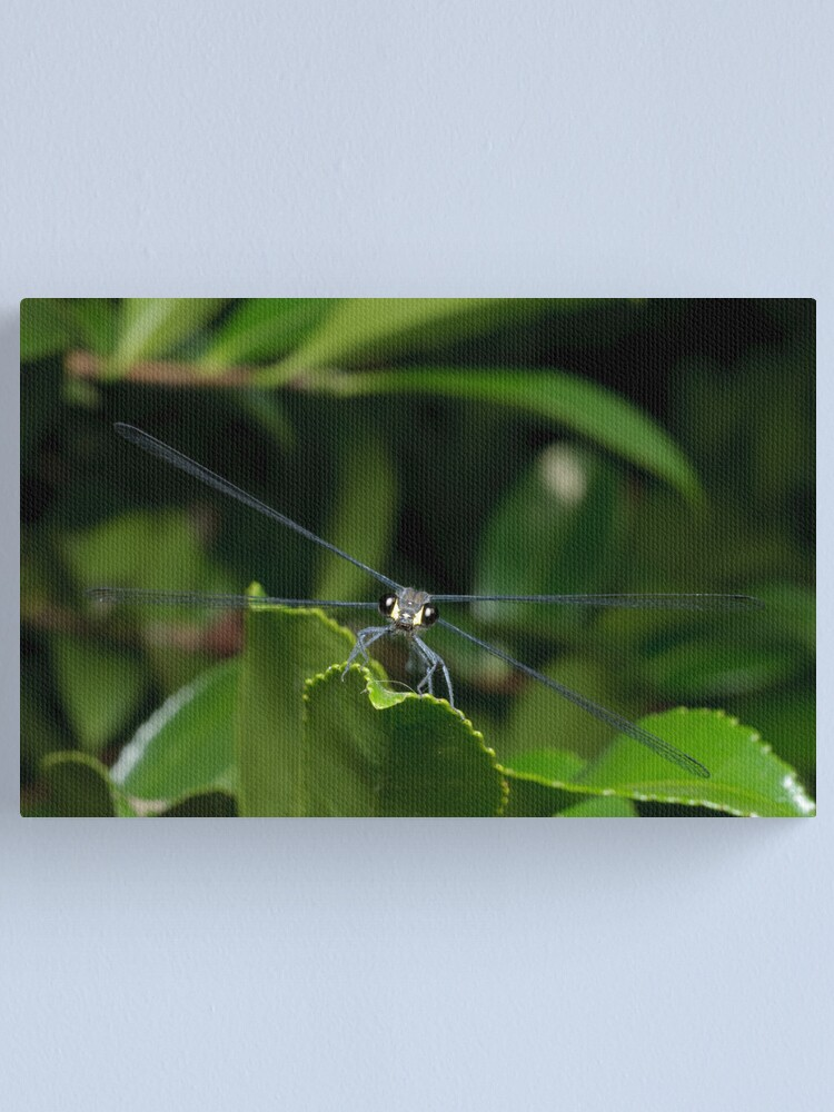 Alternate view of Flatwing Damselfly Canvas Print