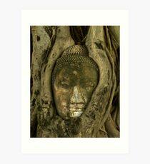 Budda Head in Tree Art Print