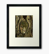 Budda Head in Tree Framed Print