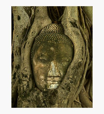 Budda Head in Tree Photographic Print
