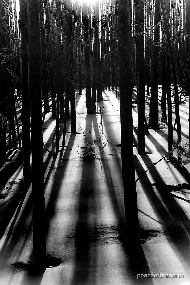 Winter Shadows...B/W by peaceofthenorth