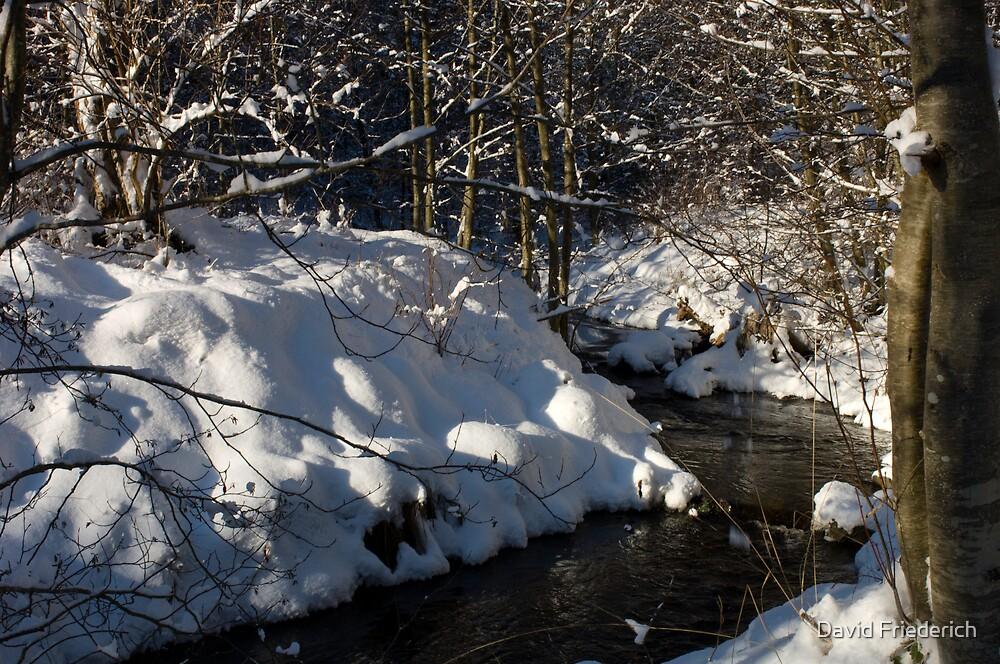 A Walk in the Snowy Woods by David Friederich