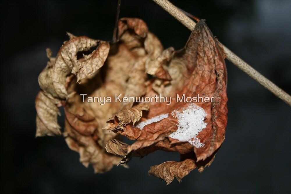 Leaf Cup by Tanya Kenworthy-Mosher
