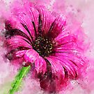 Gorgeous Pink Daisy- Loose Watercolor by ibadishi