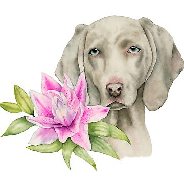 Innocence   Weimaraner and Lily Watercolor Painting by namibear