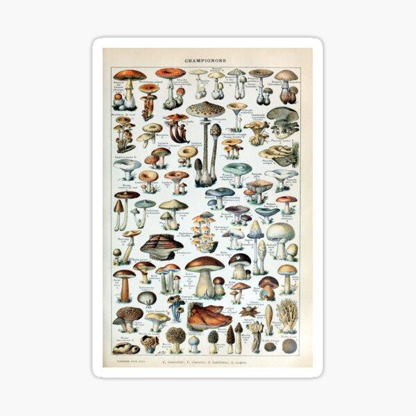Vintage essbare Pilzkarte Sticker