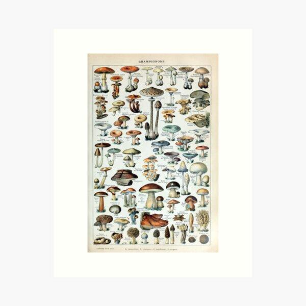 Vintage Edible Mushroom Chart Art Print