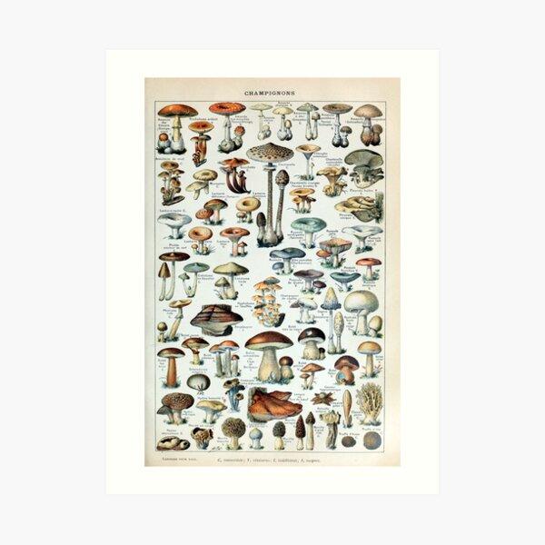 Vintage essbare Pilzkarte Kunstdruck