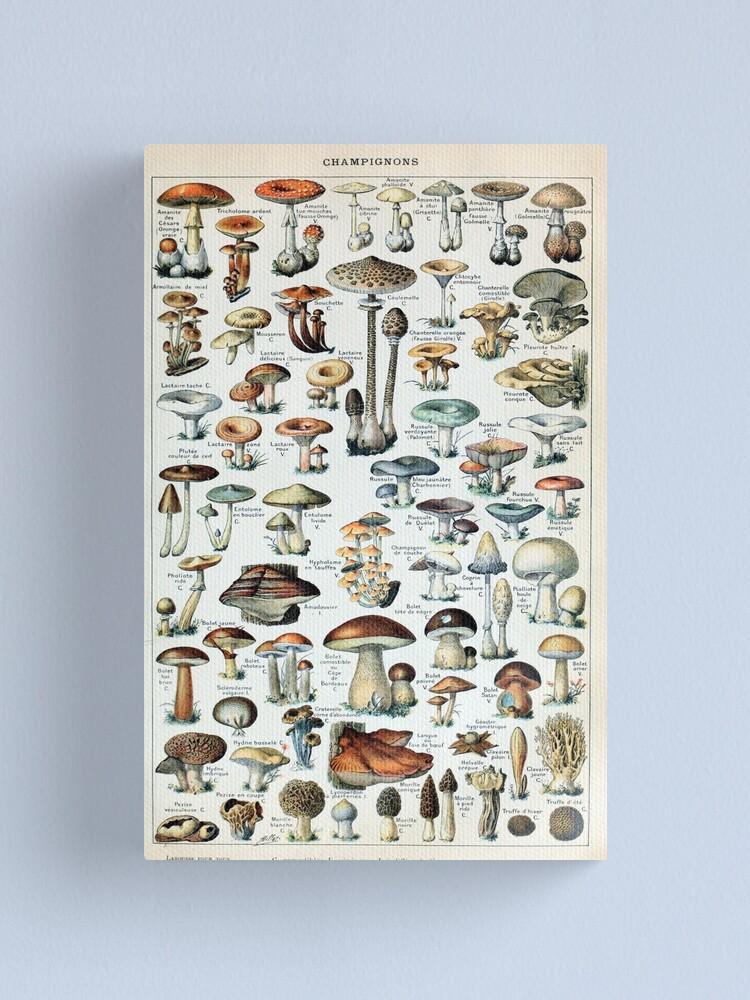 Alternate view of Vintage Edible Mushroom Chart Canvas Print