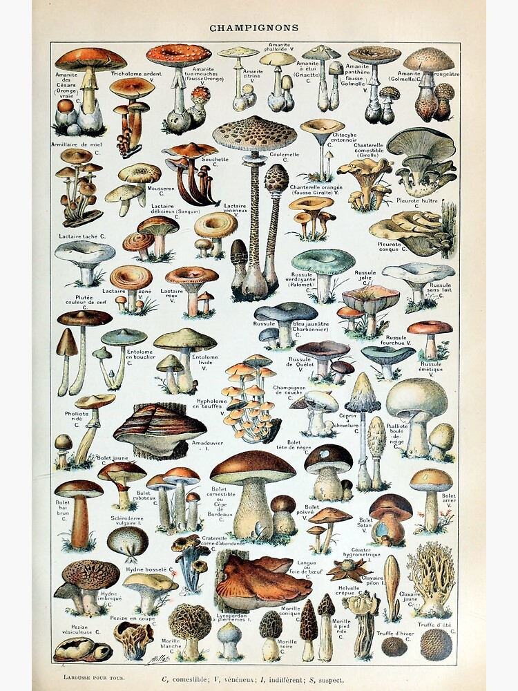 Vintage Edible Mushroom Chart by pdgraphics