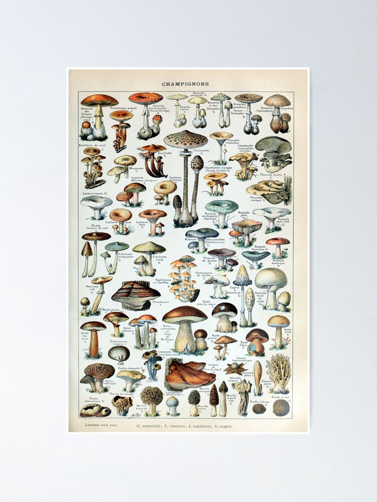 Alternate view of Vintage Edible Mushroom Chart Poster