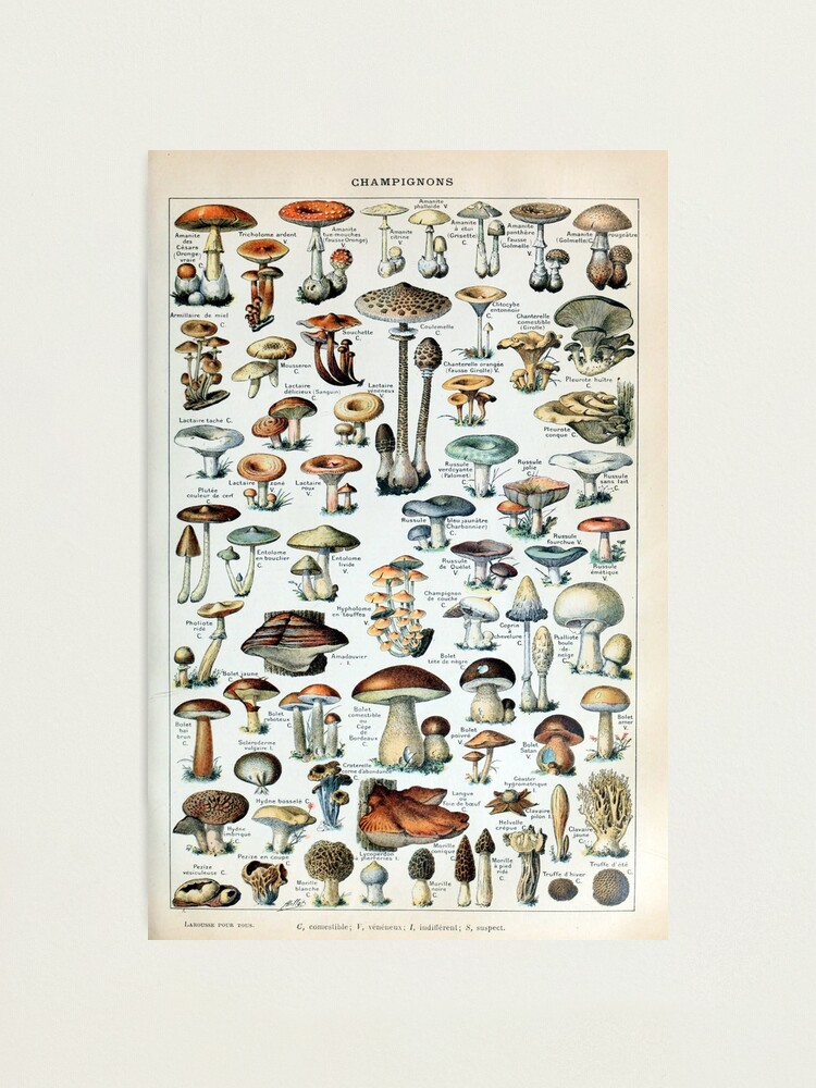Alternate view of Vintage Edible Mushroom Chart Photographic Print
