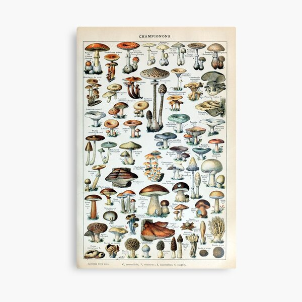 Vintage Edible Mushroom Chart Canvas Print