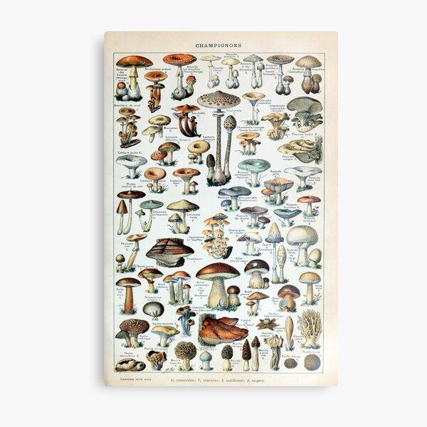 Vintage Edible Mushroom Chart Metal Print