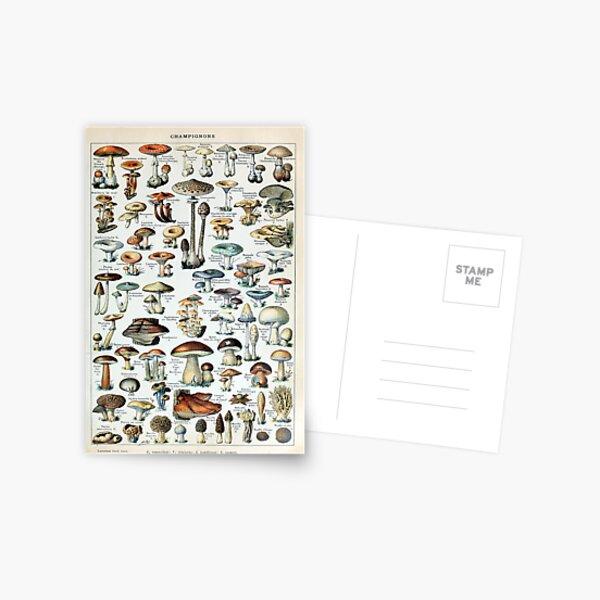 Vintage essbare Pilzkarte Postkarte