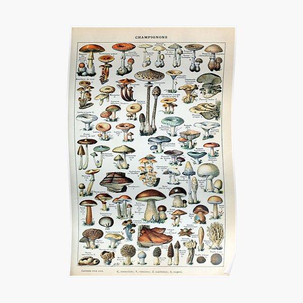 Gráfico de hongos comestibles vintage Póster