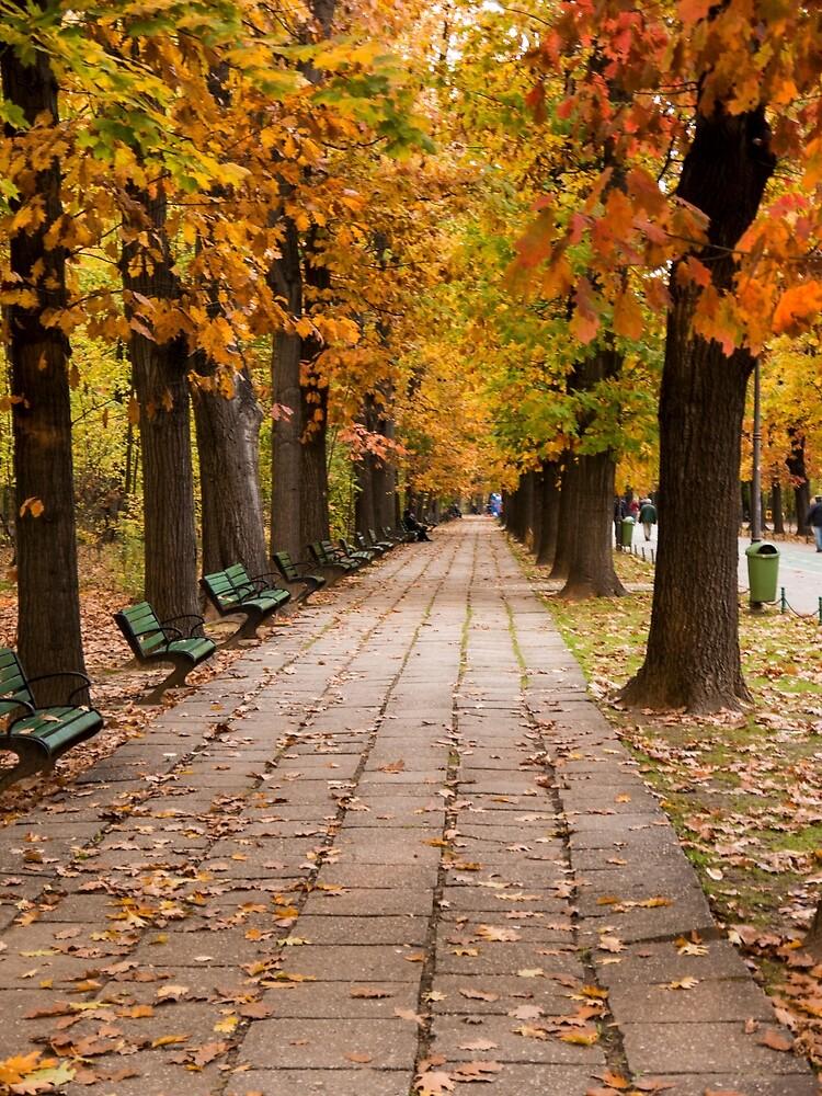 Bucharest Autumn Stroll by Rae Tucker