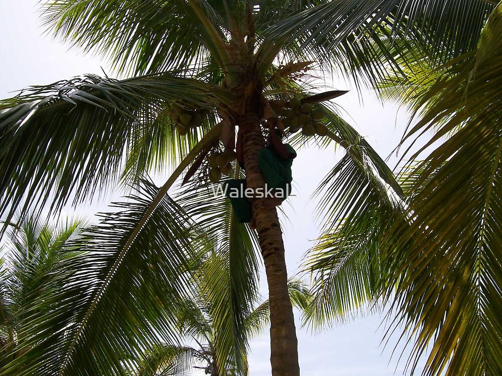Free Coconut climber by WaleskaL