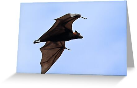 Fruit Bat by Nickolay Stanev
