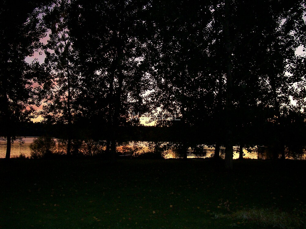 Silhouettes of Trees at Sunset by WaleskaL