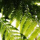 Forest Fern by Joel McDonald
