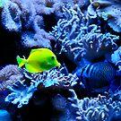 Deep Under The Sea by Geoffrey