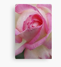 Pink Souffle Canvas Print