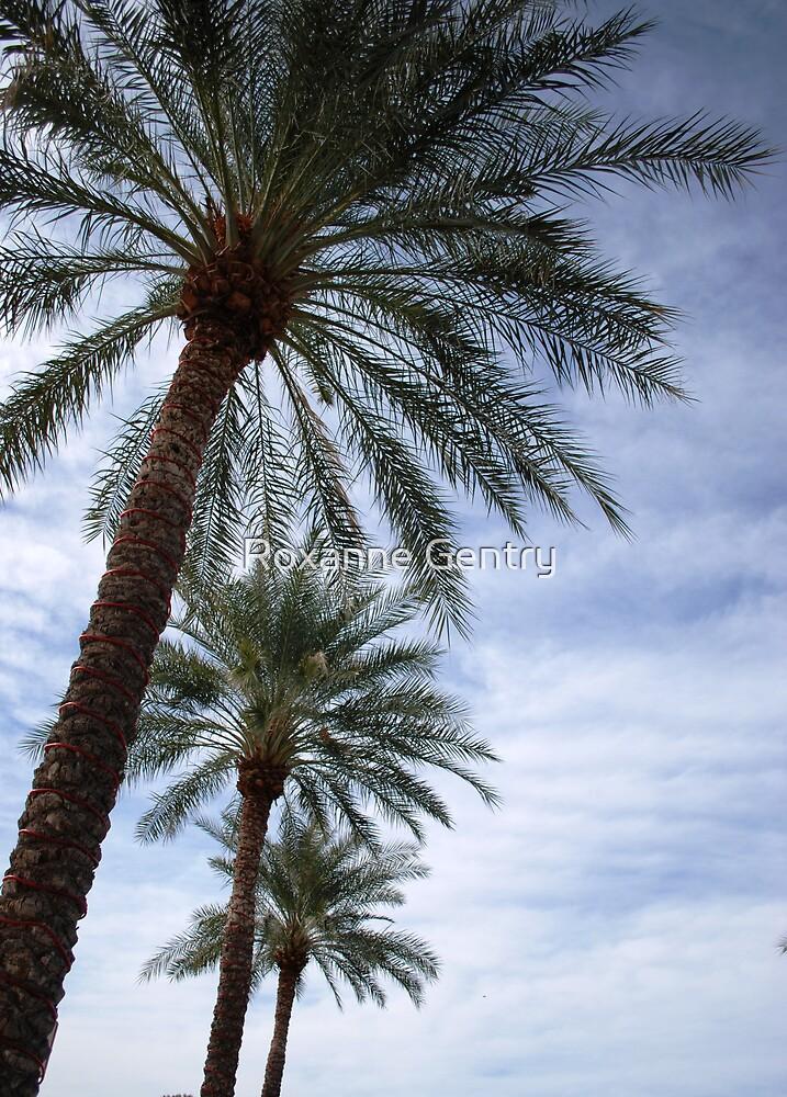 Arizona Winter by Roxanne Gentry