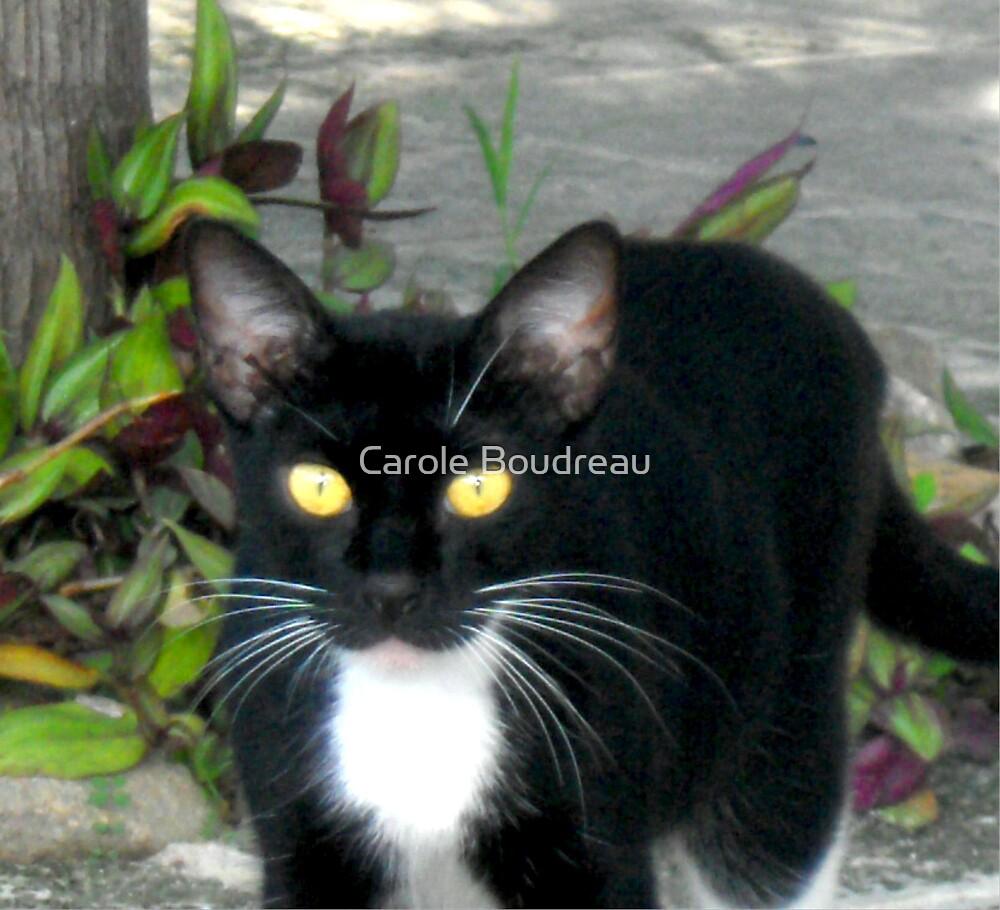 Carribean Cats by Carole Boudreau