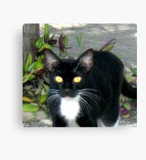 Carribean Cats Canvas Print