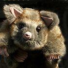 Cuddly Possum......!! by Roy  Massicks