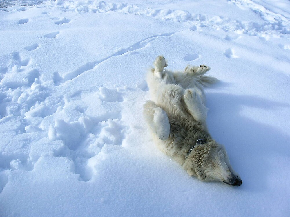daMuff making snow angels :} by boondockMabel