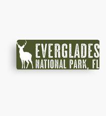 Deer: Everglades National Park, Florida Canvas Print