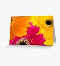 Gerbera's... Greeting Card